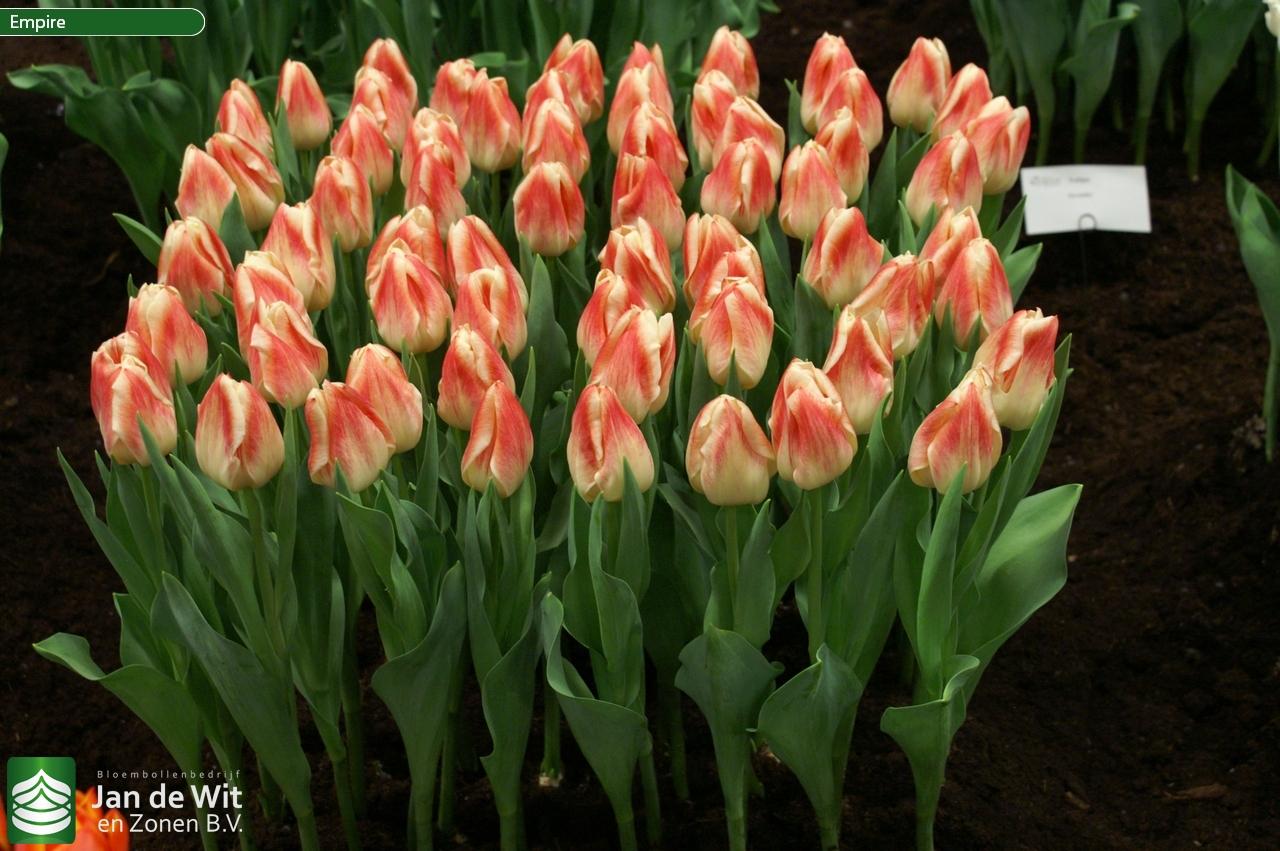 Рассада цветов в Белореченске Краснодарского края цены 73