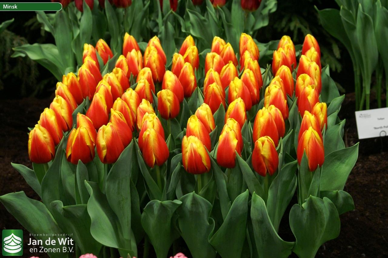 Рассада цветов в Белореченске Краснодарского края цены 1