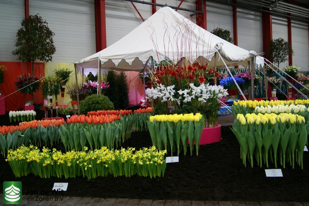 Новая голландия цветы купить, цветов