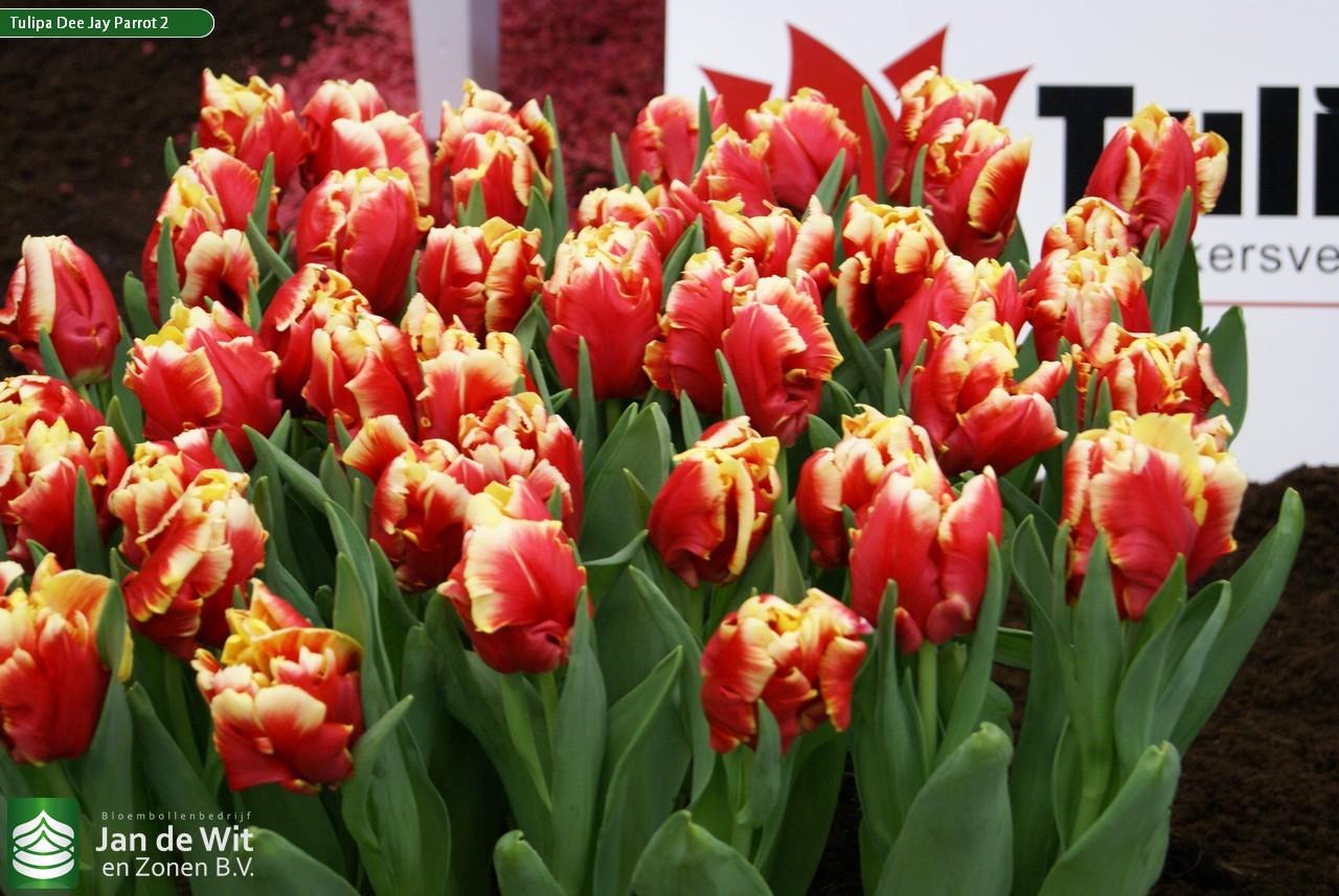 Рассада цветов в Белореченске Краснодарского края цены 16