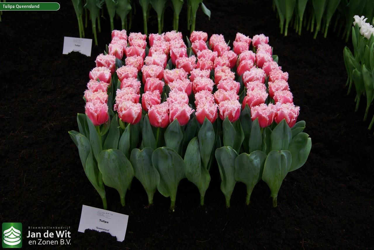 Рассада цветов в Белореченске Краснодарского края цены 93