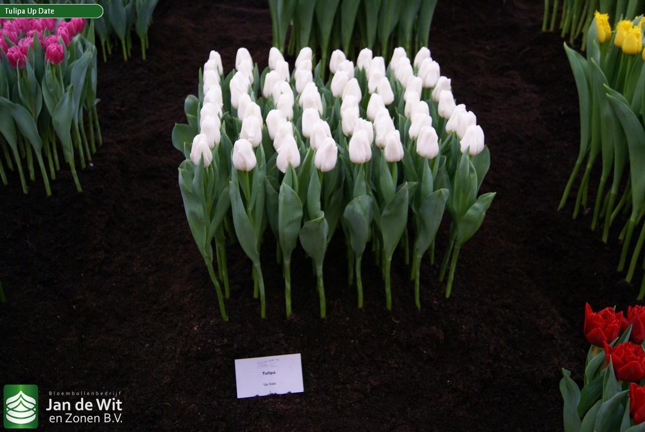 Рассада цветов в Белореченске Краснодарского края цены 54
