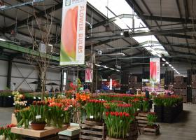 Visit us during the Tulip Trade Event